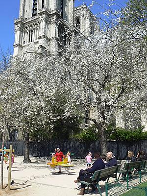 arbres en fleurs.jpg