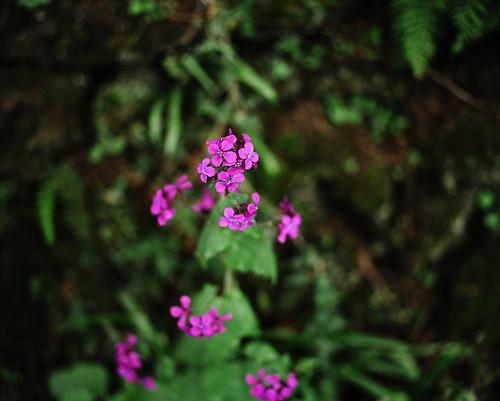 Flowers on Tabor