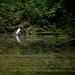 池端の水鳥