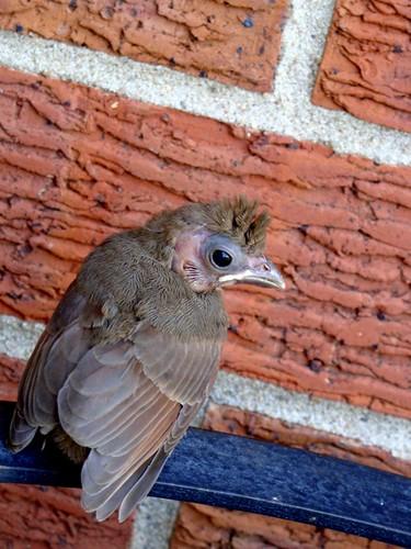 Crazy Little Bird
