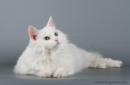 Всем поклонникам кота Пиндыка посвящается :) Pindo & Co (39)