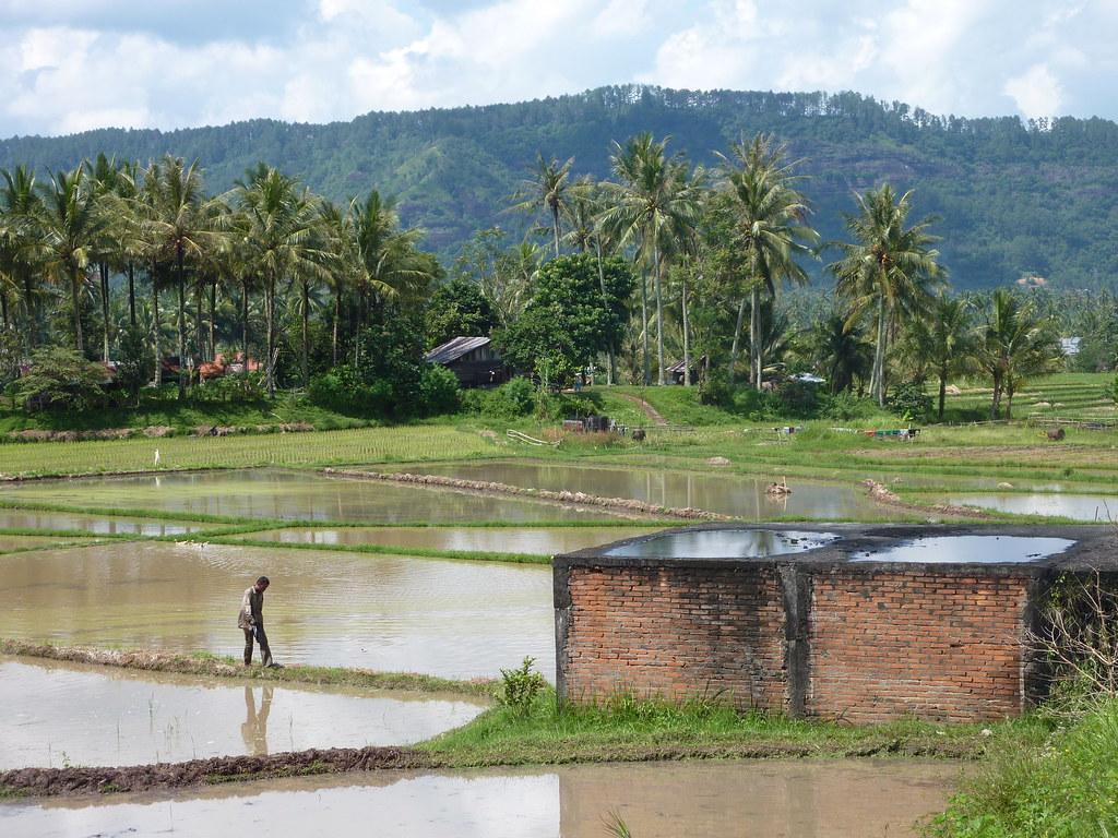 Sumatra-Bukittinggi (210)