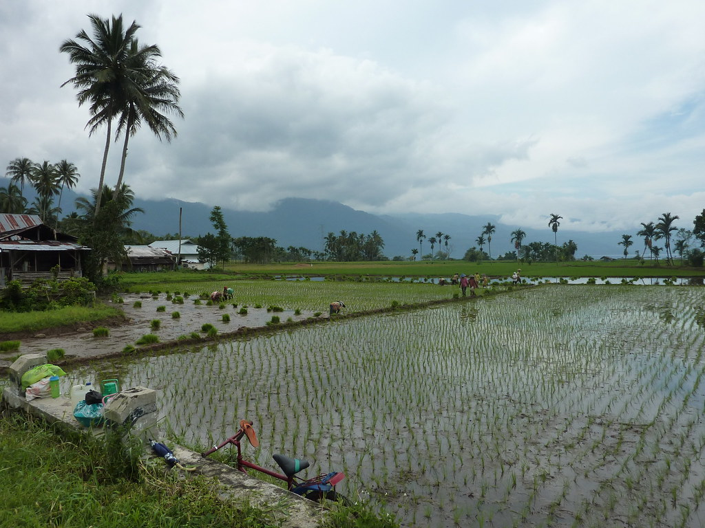 Sumatra-Lac Maninjau (104)