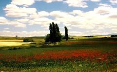 """Spanien  - Mohnfeld und schöne Wolken   - 0301 (roba66) Tags: flowers sky clouds landscape spain feld wiese wolken blumen poppy greatshot fields landschaft espagne spanien mohnfeld beautifulphoto kartpostal ysplix concordians flickrbestpics flickraward"""" panoramafotográfico dragonsdanger mbpictures roba66 esenciadelanaturaleza"""