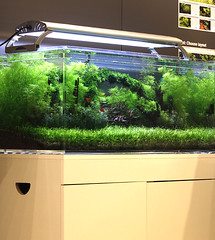 22 tropica tank (George Farmer) Tags: plants fish water aquatic aquascape tropica aquascaping tgm georgefarmer ukaps interzoo