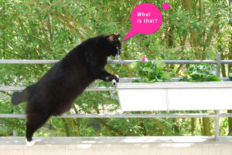 Cat's questions, 01
