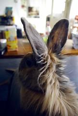 Playboy (Herrkakerlaken) Tags: rabbit bunny logo ears playboy