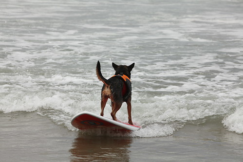 5th Annual Surf Dog Competition in Imperial Beach