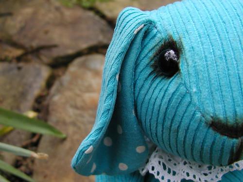turquoise bunny - eye