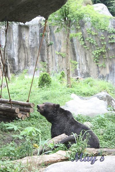990522台北動物園 130