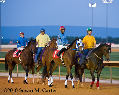 Down Town Allen goes to the start of the Its Binn Too Long Stakes at Charles Town Races. Thoroughbred Horse Racing.