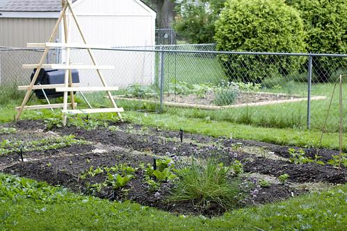 2010 Garden: Week 3