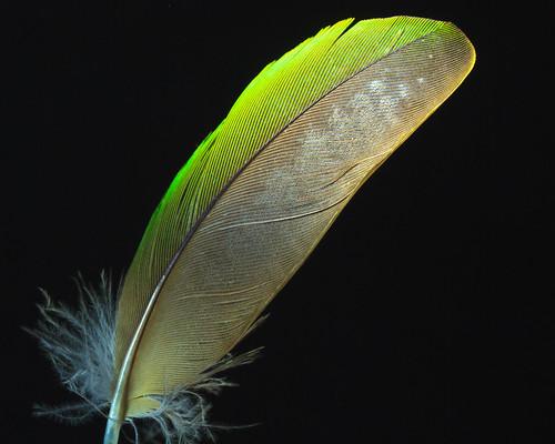 Twiglet Feather