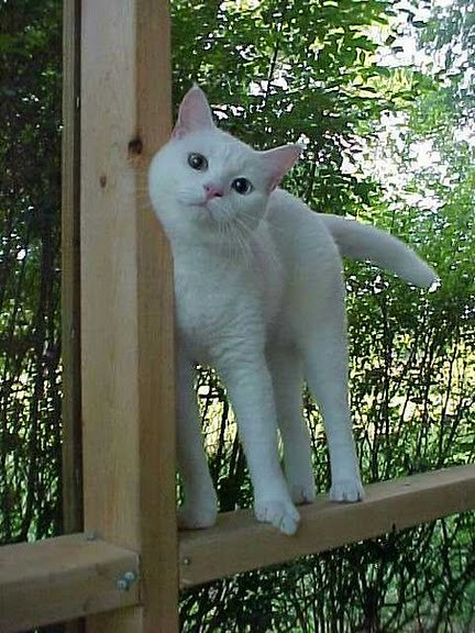 cute rescued white cat