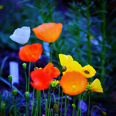 Majblommor (Dirigentens) Tags: flowers gteborg nikon sweden gothenburg d70s sverige 1001nights blommor trdgrden botaniska bsquare thegalaxy 200c diamondclassphotographer flickrdiamond flickrsilveraward platinumheartaward 100commentgroup capturenx2 elitephotographers 1001nightsmagiccity mygearandmepremium mygearandmebronze betterthangoodlevel2 greaterphotographers sunofgodphotographer greatestphotographers ultimatephotographers 100silver aboveandbeyondlevel1 rememberthatmomentlevel4 rememberthatmomentlevel1 rememberthatmomentlevel2 rememberthatmomentlevel3 rememberthatmomentlevel5