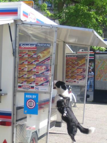 hotdoggie