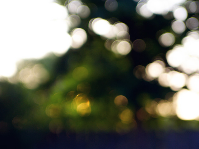 morning bokeh