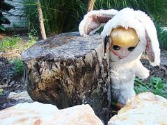 Aury Bunnyears