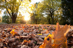 Herbst im Stadtpark (Duras666 -> new Account -> Jacques_Norris) Tags: autumn sun fall leaves laub herbst fisheye aachen jonas sonne blätter stadtpark nikkor105mm d90 rüter jonasrüter