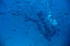 IMG_0683 (monkeyshi) Tags: redsea egypt sayed hurghada  1585 400d kissx