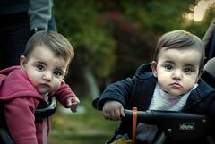 [フリー画像] 人物, 子供, 赤ちゃん, 兄弟・姉妹, 双子, 201010311100