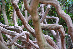 Branching Out All Over the Place at Sheffield Park & Garden (antonychammond) Tags: uk england tree branches nationaltrust eastsussex gmt potofgold sheffieldparkgarden saveearth trasognoerealta esenciadelanaturaleza