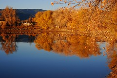 Reflections of Fall (Let Ideas Compete) Tags: blue autumn trees lake reflection fall water leaves yellow reflections gold mirror pond colorado colorful branches smooth lakes blues twin peaceful tranquility surface calm foliage hues shore serenity co mirrored serene essence colourful limbs twinlakes yellows hue tranquil placid glassy gunbarrel windless 80301 peasceful