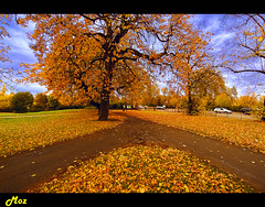 Autumn Bonanza (Muzammil (Moz)) Tags: uk autumn london hydepark touristattractions moz londonparks londonattractions autumninlondon afraaz