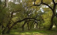 The Willows at Pyramid Lake (Calcareous Al) Tags: great basin
