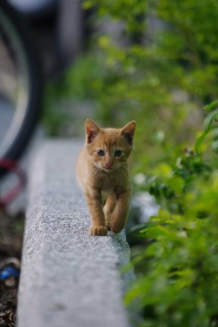 與小貓共度快樂的一小時。侯硐。
