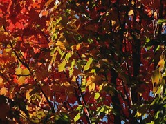 Touch of Autumn (Boyds Gallery) Tags: autumn fall colors oregon coast video slideshow