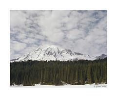 Mt. Rainier (Daiku_San) Tags: film ishootfilm colorfilm 4x5 largeformat sheetfilm expiredfilm buschpressmand caltariin15056 fujipro160s epsonv750mpro