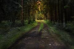 Sunset in forest (AndreasNikon) Tags: sunset sweden color nocrop nohdr nikond600 wind angel landscape skanecounty sommar solnedgång forest skog nikkor ngc