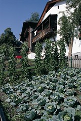 Diversity in farmers' homegardens in Eastern Tyrol (Austria)