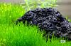 IMG_1889-1 (naturalaquascapedesigns) Tags: riccia ricciafluitans nano plantedaquarium