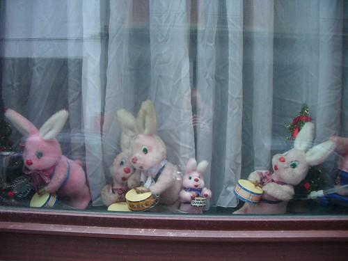 24/12- rabbits