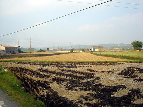 24.128縣道上無垠的稻田