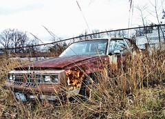 Cutlass Update 2 (BACKYard Woods Explorer) Tags: abandoned weeds rust decay oldsmobile abandonedcars cutlasssupreme