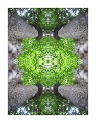 Expedition Espiritu 016 (Morgan Maher) Tags: trees wild plants art ecology leaves forest visions mirror leaf symmetry spirits jungle balance wilderness gaia ayahuasca supernatural espiritu