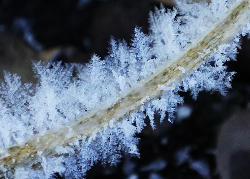 Icy Stalk