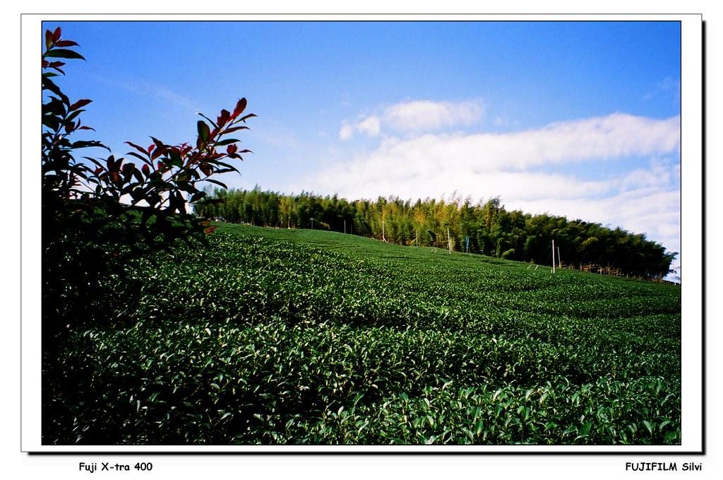 八卦茶園 & 天空的院子