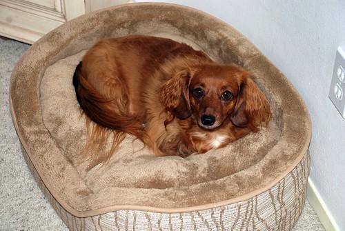 Molly's Dog Bed