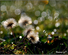 Spikey Bokeh (Roamer 57) Tags: winter cold nature wet grass bokeh spikes theworldwelivein topseven nikond80 vanagram magicunicorntheverybest