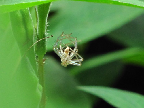 IMG_3199 小蜘蛛