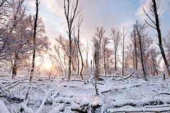 Zonsopkomst, Oostvaardersplassen (Thomas Heye) Tags: sunrise nikon d300 zonsopkomst oostvaarderplassen 1424