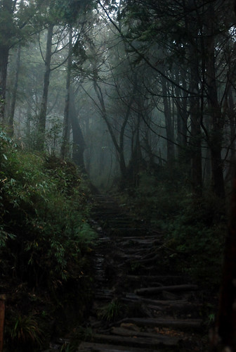 鐵杉林步道