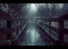 None shall pass! (sparth) Tags: trees lake reflection water fog fence high dock january foggy redmond ghostly brouillard atmospheric 2010 marymoor sammamish 70200f4l marymoorpark 70200l fantomatique 5dmarkii floodded