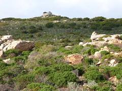 La montée directe vers la tour de Santa Manza