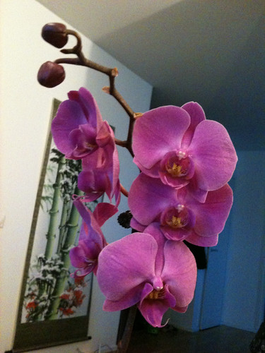 Orchid, my birthday gift
