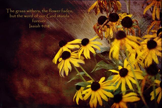 vintage flower verse
